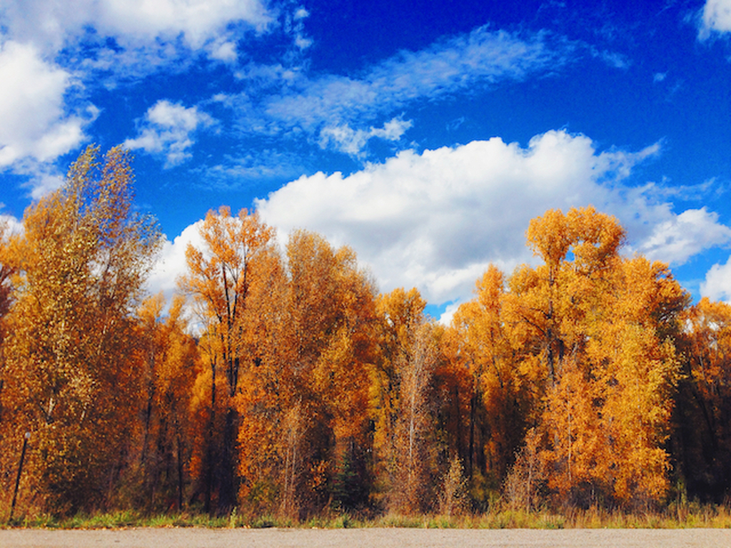 Fall housing forecast: moderating prices, tighter inventory, less competition